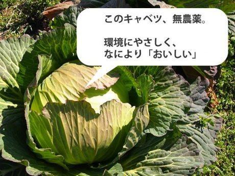 TPPに負けない、自由競争でも勝てる栽培技術「日本情報化農業研究所」