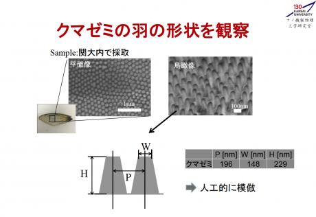 クマゼミの羽が持つ抗菌作用、関西大学はこの物理構造の量産を模索していた